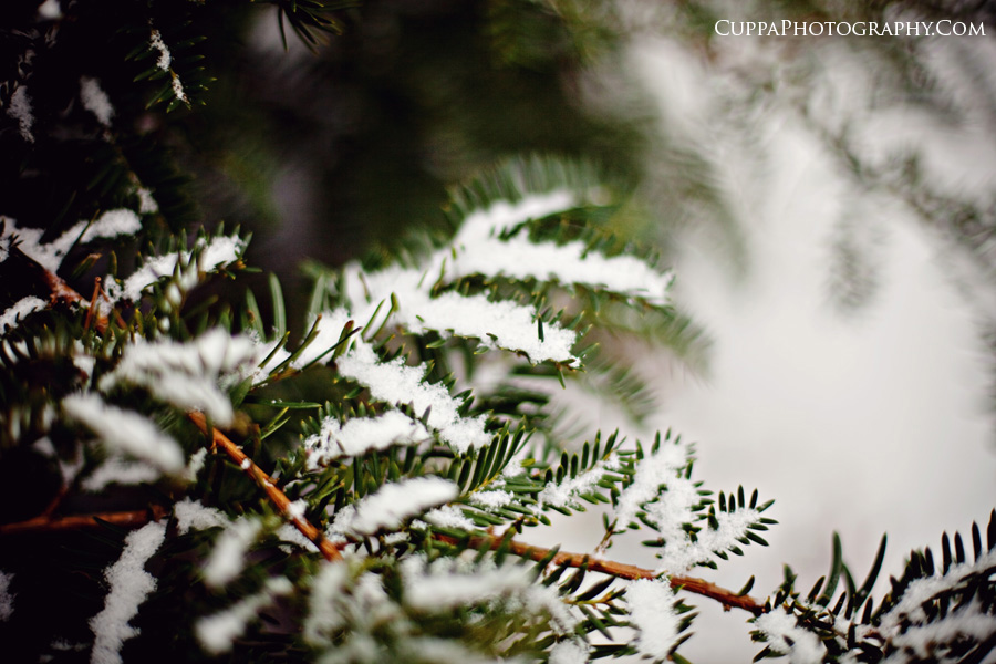 Maine wedding photographer, snow, Freeport, Maine