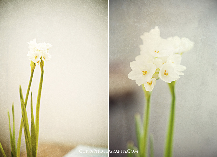 Maine wedding photographer, paperwhites, flower art