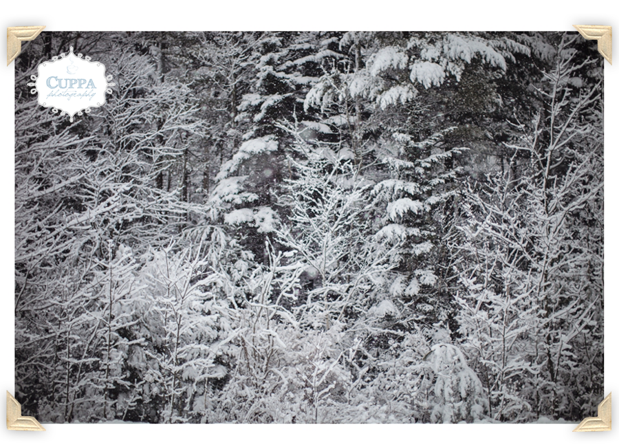 Freeport_Maine_Snow_Winter_Photography-030