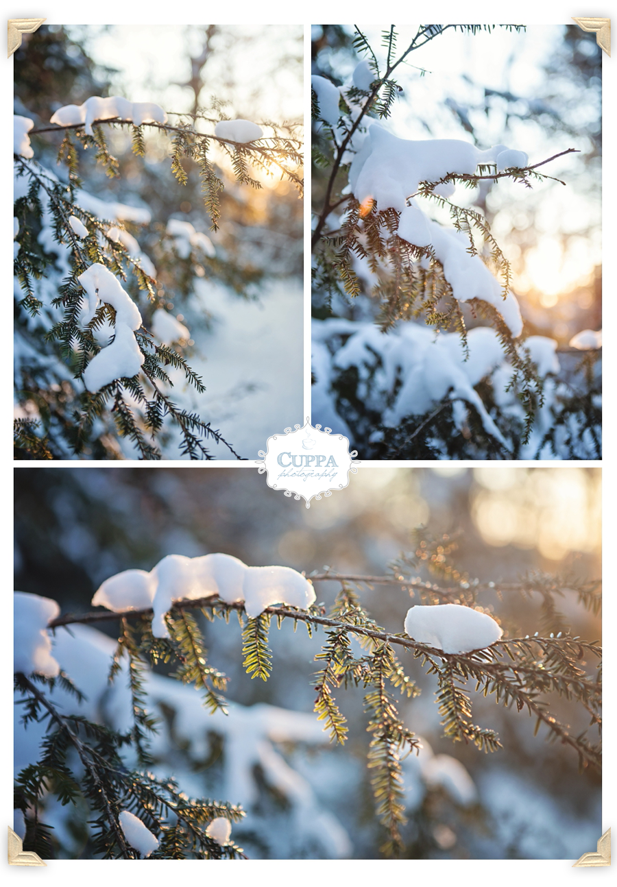 Maine_Wedding_Photographer_Outdoor_Sunrise_Bradbury_State_Park_Winter-008